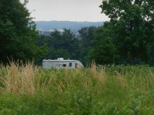 Amidst the grass, at Valley Forge