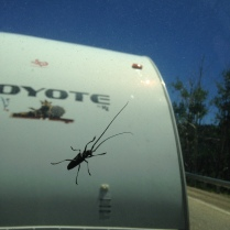 Creepy hitchhiker
