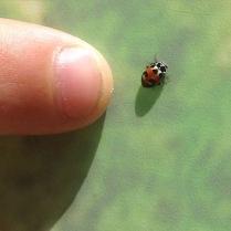Ladybug?