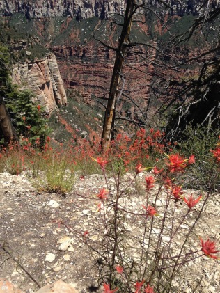 north_rim_grand_canyon_4528