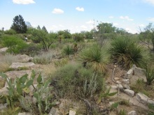 Living Desert Zoo and Gardens State Park, Carlsbad, NM7