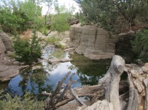 Living Desert Zoo and Gardens State Park, Carlsbad, NM8