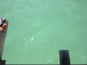 amazingwater