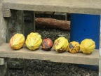 Caribeans Chocolate Tour, Puerto Viejo de Talamanca