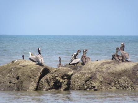 Playa Las Comadres12