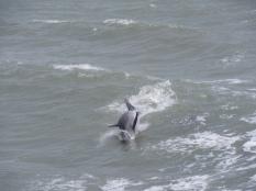 dolphin boat tour spi12