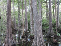 Big Cypress National Preserve14