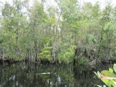 Big Cypress National Preserve4