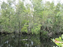 Big Cypress National Preserve4