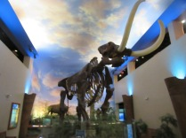 South Florida Museum, Bradenton3