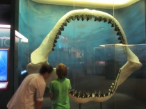 South Florida Museum, Bradenton5